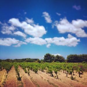 Carignano-Trauben auf der Insel Sant'Antioco vor Sardiniens Südwest-Küste