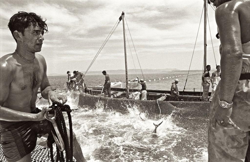 mattanza © Sardinien Intim (6)