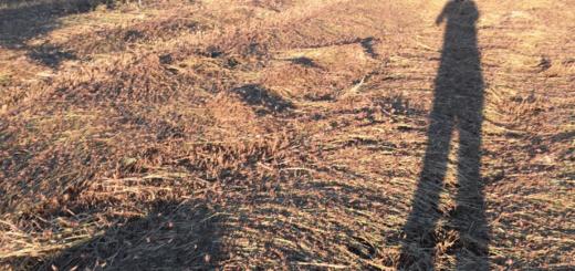 Die Heuschrecken bedecken ganze Landstriche wie ein Teppich.