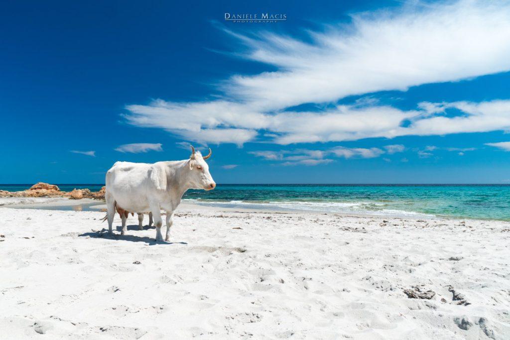 Dieses Bild hat ein leeres Alt-Attribut. Der Dateiname ist Spiaggia-Berchida-Foto-Daniele-Macis-1024x683.jpg