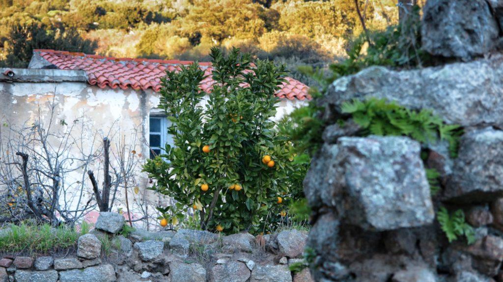 Dieses Bild hat ein leeres Alt-Attribut. Der Dateiname ist Orangenbaum--1024x575.jpg